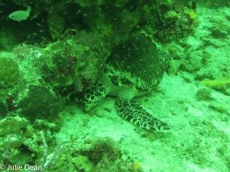 Diving-7
